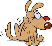 schnauzer scratching sue to allergy to dog food