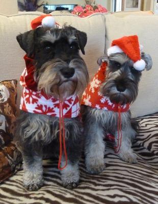 Will we see Santa.. ?