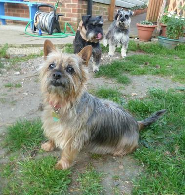 I'm Rambo .. Rebel & Benji are at the back