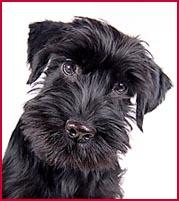 bright eyes are good dog health symptoms