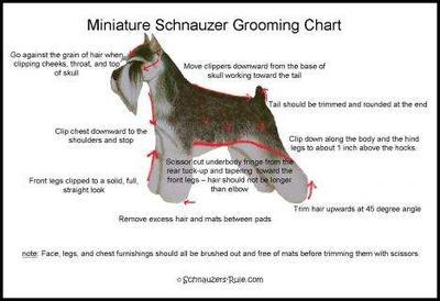 Schnauzer grooming chart