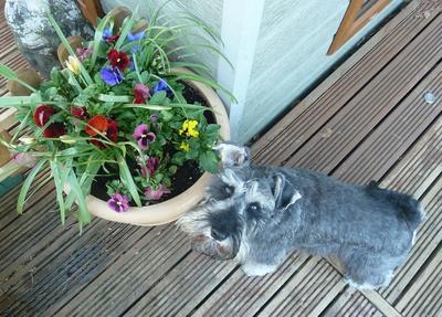 Are these flowers edible, Mummy.. ?