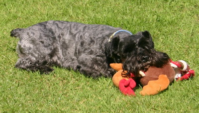 Sooty with toy.