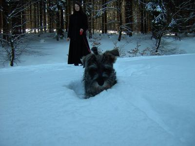 Patotas the Miniature Schnauzer in the Snow