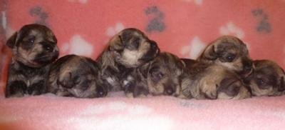 We are seven happy puppies
