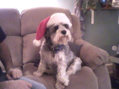 Rockie on Christmas Day