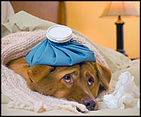 dog symptoms of illness- dog with water bottle