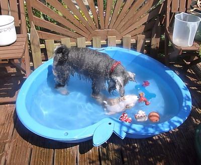 Playing in my pool is fun..