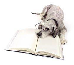 Max the Schnauzer dog quiz image