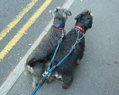 We love walking together