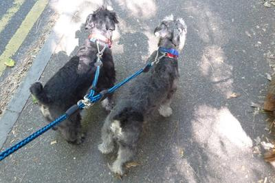 All three of us go walkies now..