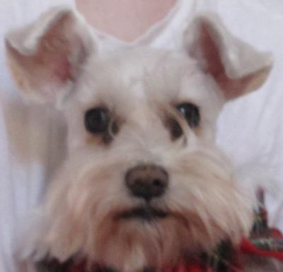 Dog Pink Nose Turning Black
